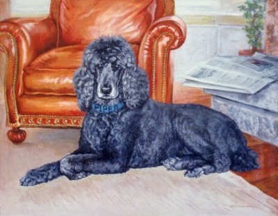 Poodle (Piper)